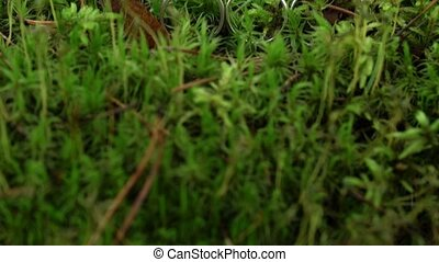 Three rings in moss