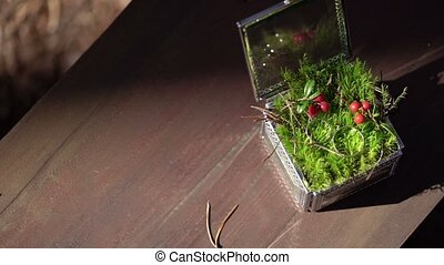 Wedding rings in a beautiful box with moss at sunny day