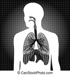 Human system respiratory vector illustration