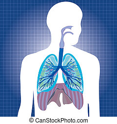 Human system respiratory illustration
