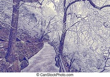Winter evening landscape in Huangshan National park. Park...