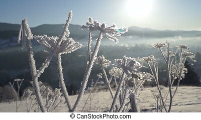 Winter spring sun mountain ice - Winter forest in snow,...