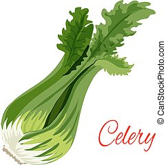 Celery herb vegetable flavoring vector icon - Celery bunch...