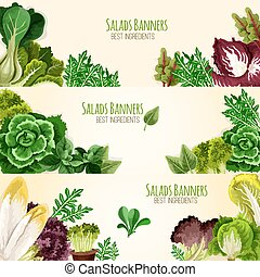 Salads or leafy vegetables vector banners set - Lettuce...
