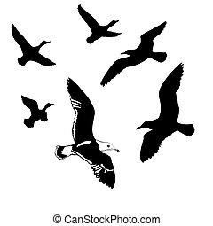 vetorial, silhuetas, voando, Pássaros, branca, fundo