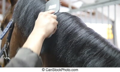 Male hand combing a black or brown horse mane in a stall. Young man combing a fetlock a mane stallion. Care for animals. Horseriding club. Slow mo, slowmotion, closeup, close up