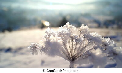 Winter forest sun plant snow ice - Plant in snow winter to...