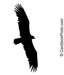 vettore, illustrazione, volare, Uccelli, bianco, fondo