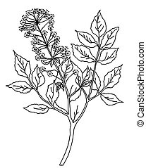 vector silhouette of the plant on green background