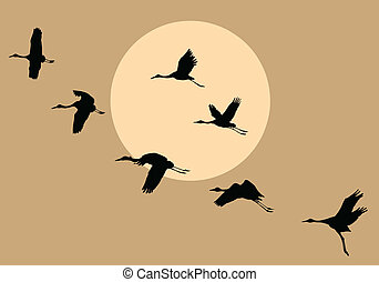 vector silhouettes flying cranes on background sun