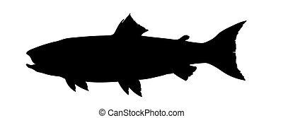 vetorial, silueta, salmão, branca, fundo