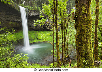South Falls in the Silver Falls State Park, Oregon, USA -...