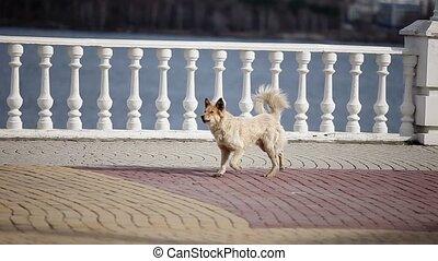 Dog runs on city street at sunny day