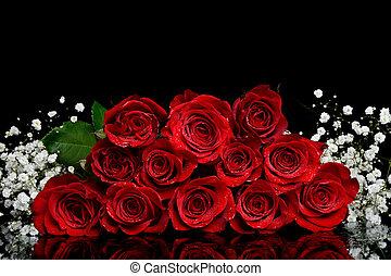 Dozen Roses - dozen wet red roses on black background
