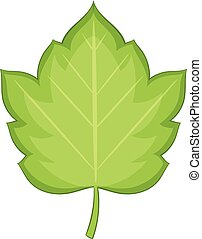 Hawthorn leaf icon, cartoon style - Hawthorn leaf icon....