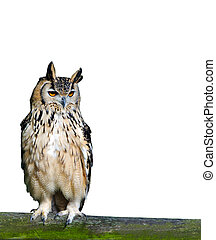 Detailed image of an eagle owl, isolated on pure white -...