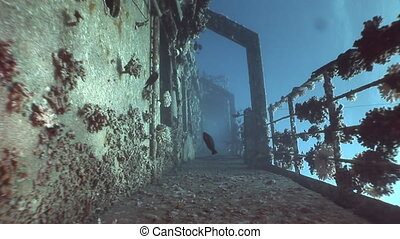 Deck of ship Salem Express wrecks underwater in the Red Sea...