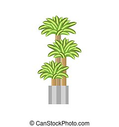 Dragon trees. Deciduous plant in flowerpot. House plant realistic icon for interior decoration . Coniferous plant in flowerpot. vector illustration