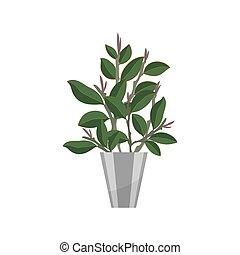 Bonsai. House plant realistic icon for interior decoration . Coniferous plant in flowerpot. vector illustration