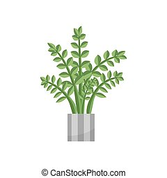 Fern.House plant realistic icon for interior decoration . Coniferous plant in flowerpot. vector illustration