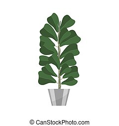 Ficus. Deciduous plant in flowerpot. House plant realistic icon for interior decoration . Coniferous plant in flowerpot. vector illustration