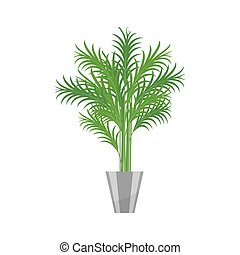 Palm tree.House plant realistic icon for interior decoration . Coniferous plant in flowerpot. vector illustration