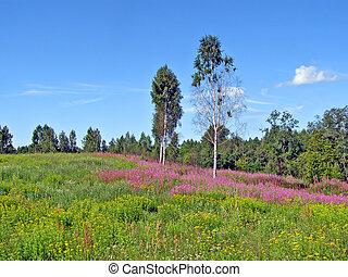 meadow near wood