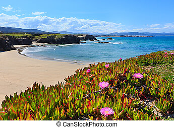 Atlantic sandy Islas beach (Spain). - Summer blossoming...