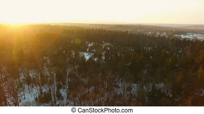 Aerial Drone View Flying over sunny forest trees