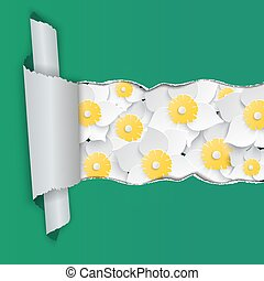 Daffodils background with ripped paper. Vector illustration