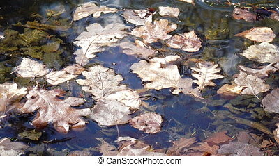 frozen leafs of trees on a pond of water in winter,