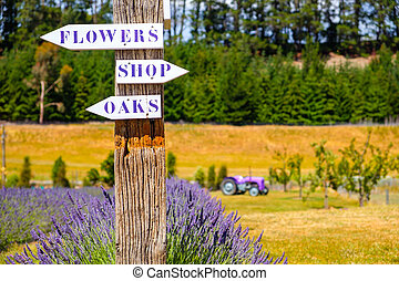 Lavender garden with direction signs and tractor in...