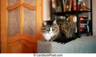 cat lying on the couch. Cat relaxing near the bookcase