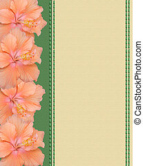 Hibiscus flowers canvas background