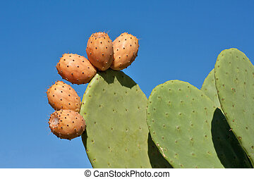 Prickly Pears Against Blue Sky - Prickly pear cactus plant...