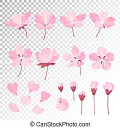 Set of beautiful cherry tree flowers isolated on wite...