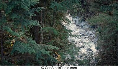 Forest Scene Of River In The Evening - River through tall...