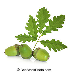 Acorn and Oak Leaf Sprig - Acorn group with oak leaf,...