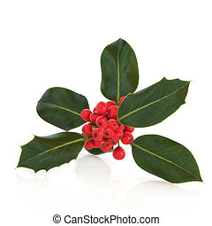 Holly Leaf and Berry Sprig - Holly leaf sprig with red...