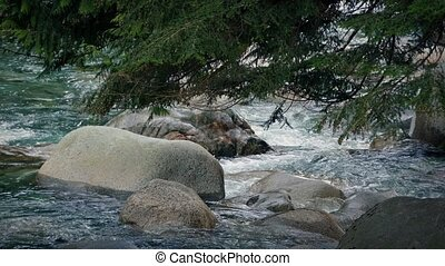 Tree Over Mountain River - Closeup of tree branches over the...