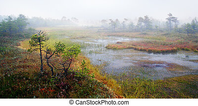 Morning on the swamp is very mystic landscape view