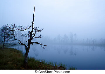 Misty morning in marsh, mysterious lakeside at foggy autumn....