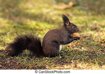 cute squirrel from the park - cute hungry squirrel from the...