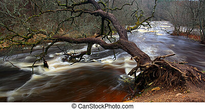 Fallen tree trunk over the river