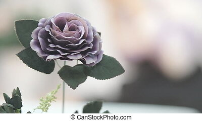 Beautiful Flowers for Decoration