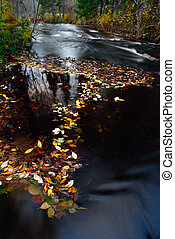 Autumn leaf floating on surface of water--stones visible on...