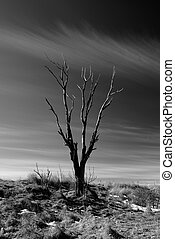 Dead tree silhouette with backlighting and high contrast.