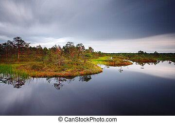 Hags in a marsh, old pines in the middle of a bog