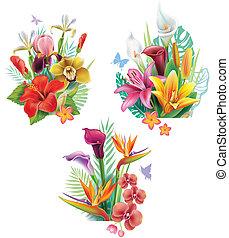 トロピカル, 花, 整理