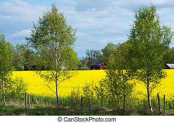 Swedish countryside in spring - View over a canola seed into...